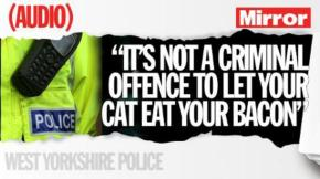 Have You Heard the One About the Man Who Called Police On a Cat That Ate His Bacon?